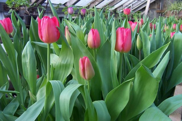 Dārza darbi februārī #1
